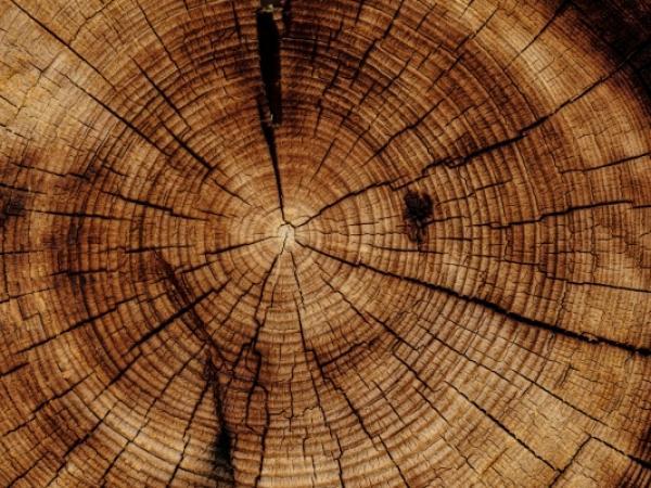 Jakiego drewna używamy w procesie produkcji?
