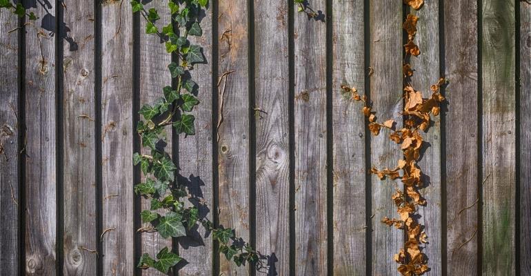 Jak wybrać kwiaty pnące na pergolę ogrodową?