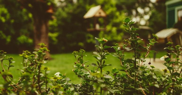 Impreza w ogrodzie – jak przygotować ogród?