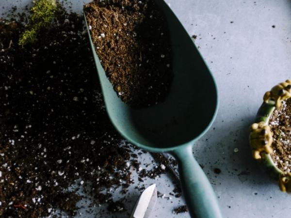 Jak założyć przydomowy warzywniak na tarasie?