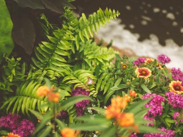 Jak założyć ogród leśny? Nasze ogrodowe inspiracje!