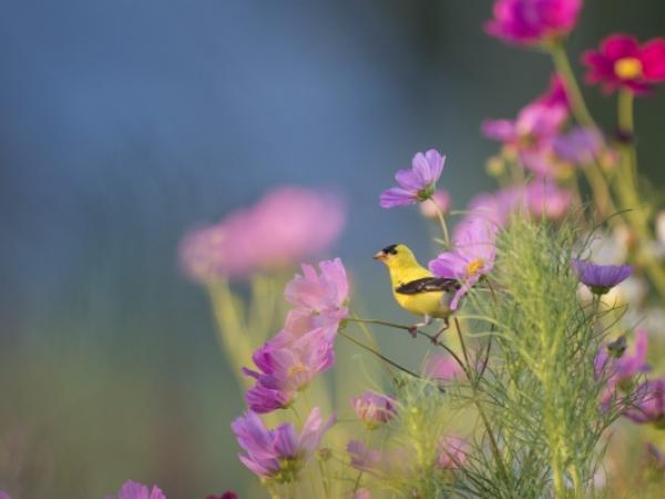 Jak założyć ogród, który kwitnie przez cały rok?