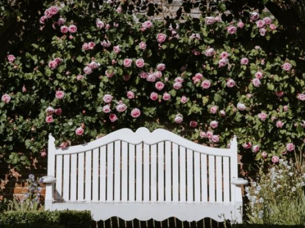 Profesjonalne projektowanie ogrodów – czy warto skorzystać z usług specjalisty?