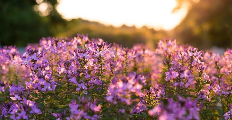 Jakie kwiaty wieloletnie do ogrodu wybrać?