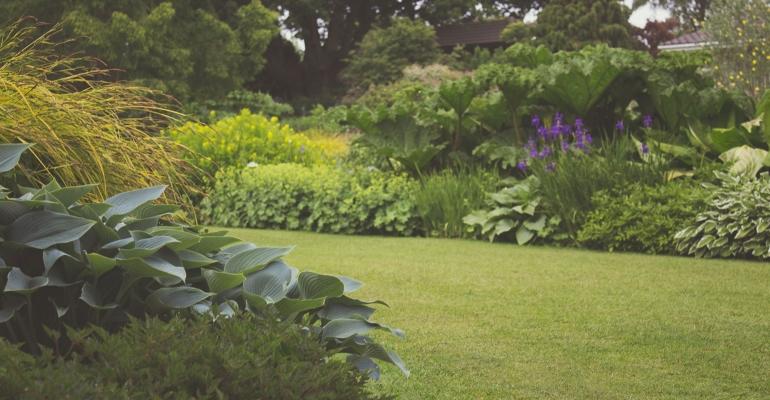 Trawy ozdobne – wszystko o sadzeniu i pielęgnacji